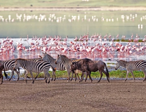 Wonderful Tanzania Safari